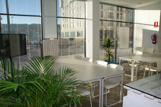 Venetian Blinds open over three floor to ceiling windows in a brightly light flat with white dining room table and green leafy plants dotted around the room.