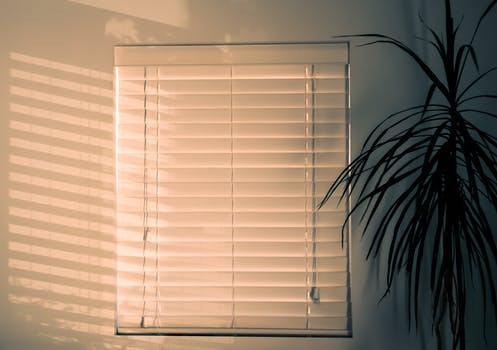 A white wall with white venetian blinds covering a small window with a green leafy plant stood beside it.